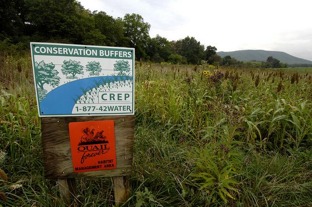 Conservation buffer, Chesapeake Bay Watershed Initiative (CBWI). Photo credit: USDA.