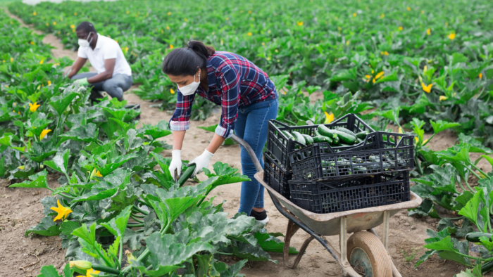 Congress Clears Another Round of Pandemic Aid with Historic Support for BIPOC Farmers